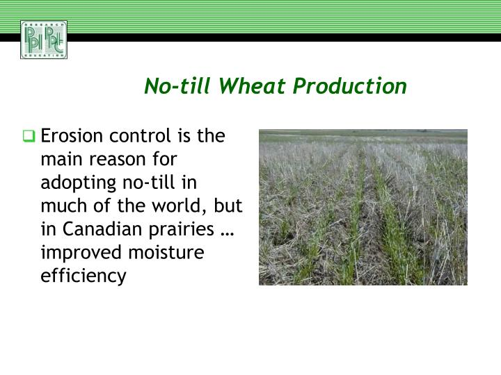 No-till Wheat Production