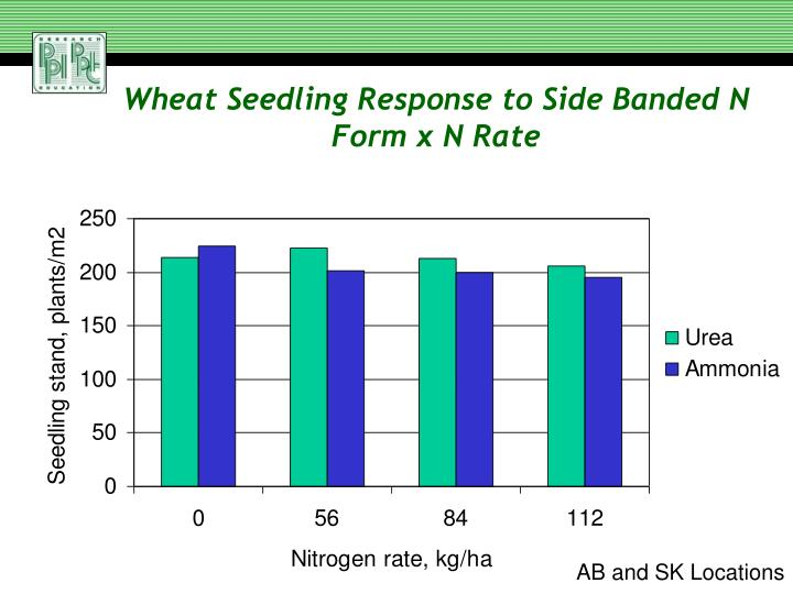 Wheat Seedling Response to Side Banded N Form x N Rate