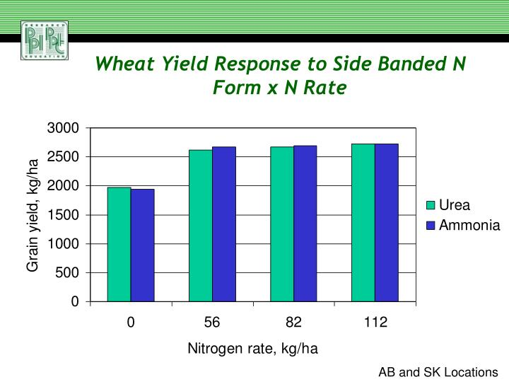 Wheat Yield Response to Side Banded N Form x N Rate