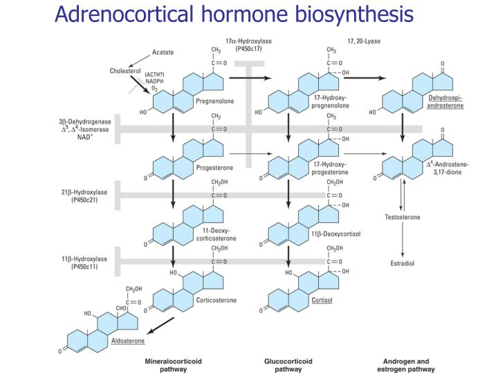 Adrenocortical hormone biosynthesis