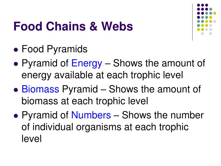 Food Chains & Webs