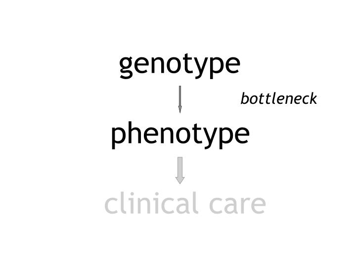 genotype