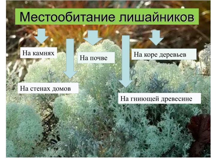 Местообитание лишайников