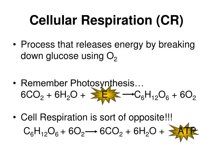 Cellular Respiration (CR)