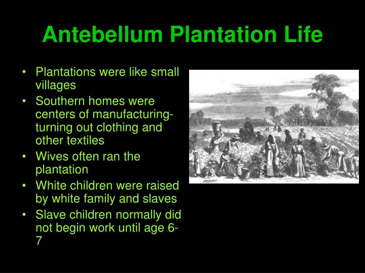Antebellum Plantation Life