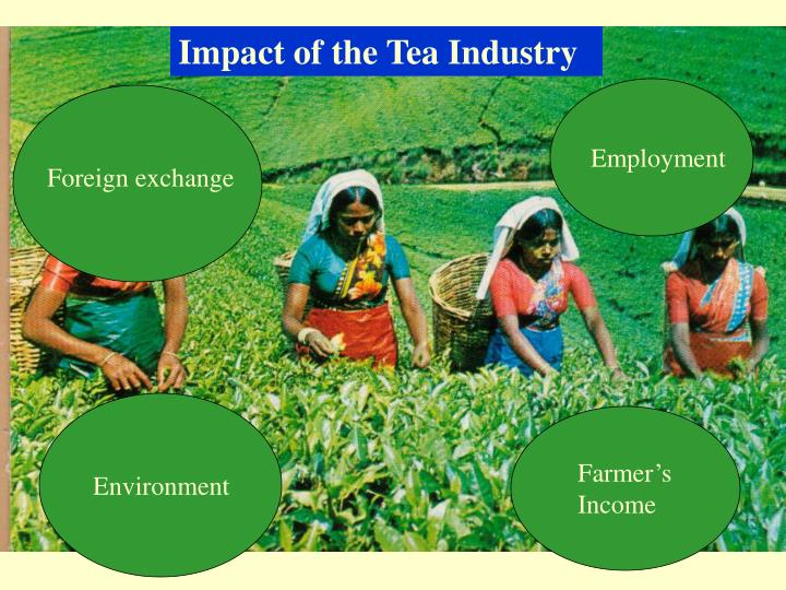 Impact of the Tea Industry