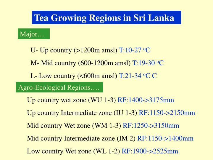 Tea Growing Regions in Sri Lanka