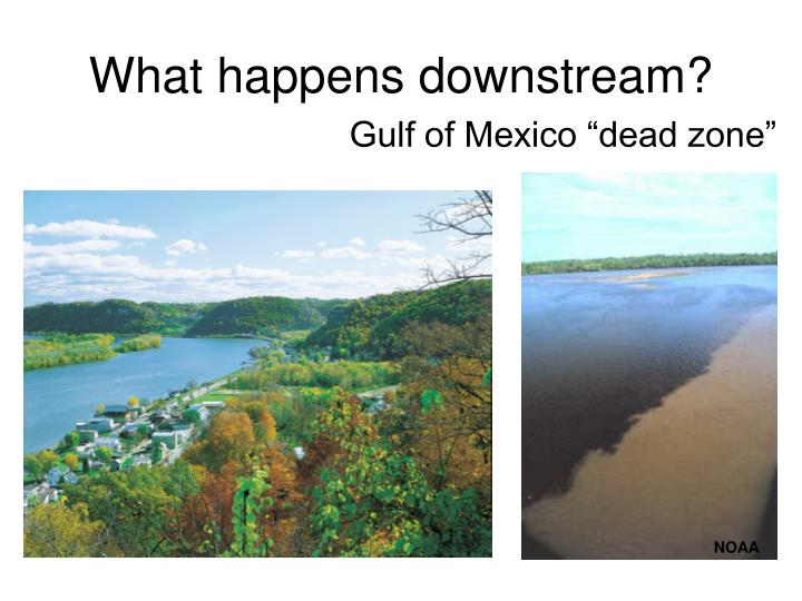 What happens downstream?