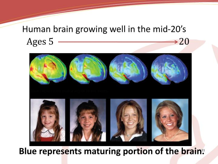 Human brain growing well in the mid-20's