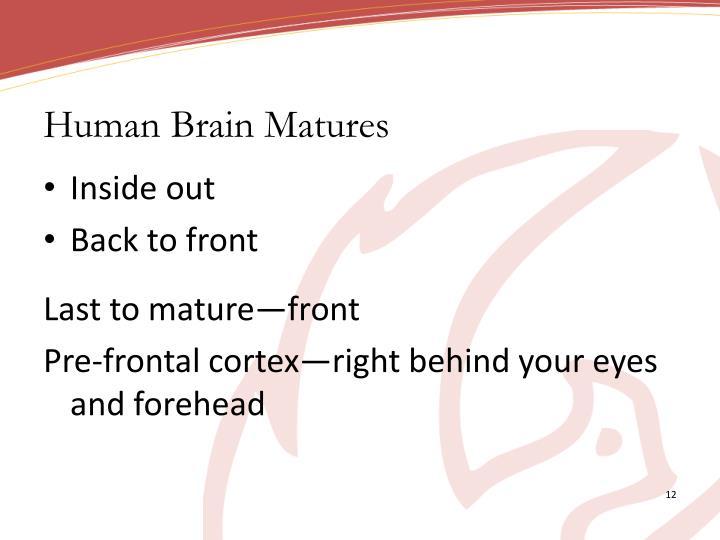 Human Brain Matures