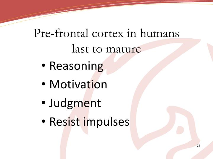 Pre-frontal cortex in humans