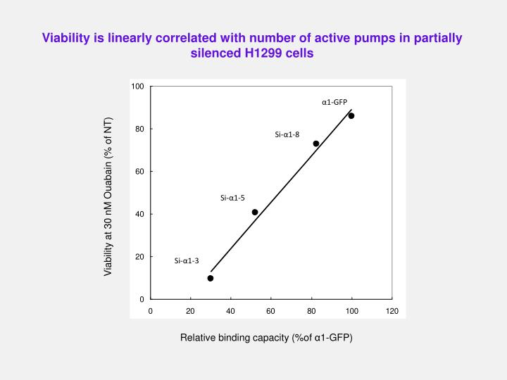Viability is linearly correlated with number of active pumps in partially silenced H1299 cells