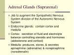 adrenal glands suprarenal