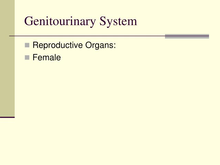 Genitourinary System