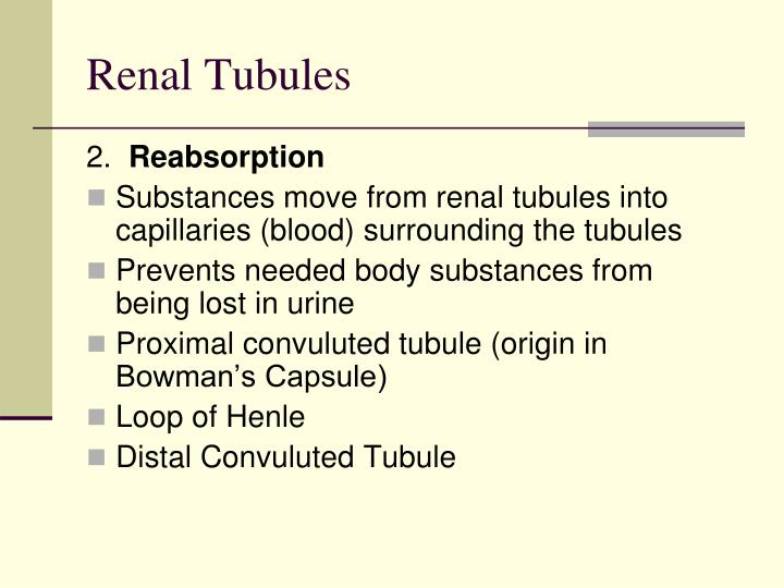 Renal Tubules