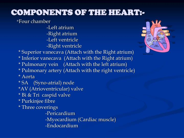 COMPONENTS OF THE HEART:-