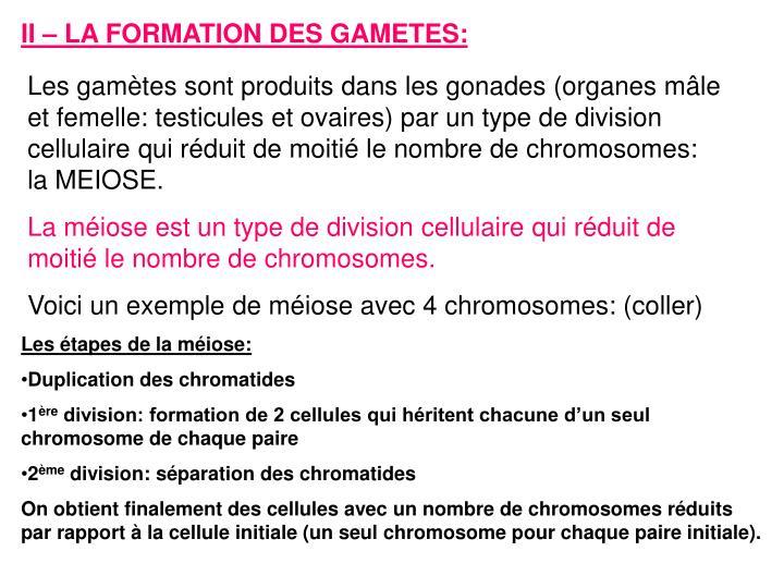 II – LA FORMATION DES GAMETES: