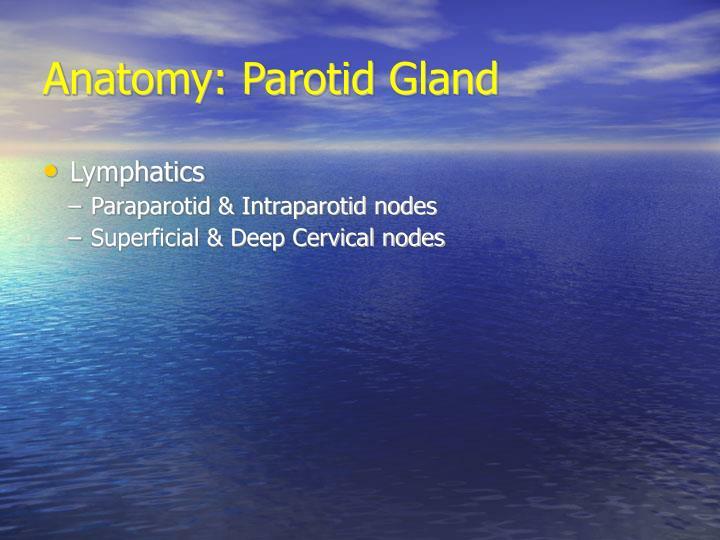 Anatomy: Parotid Gland