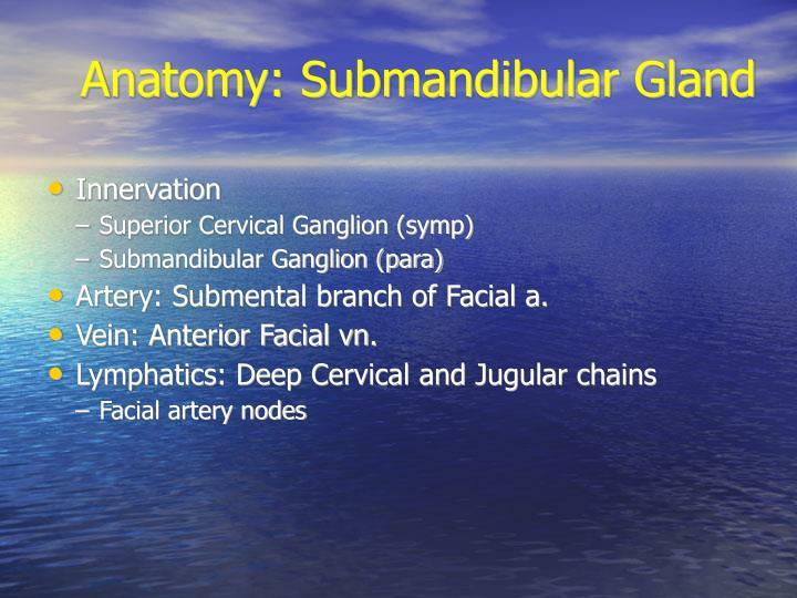 Anatomy: Submandibular Gland