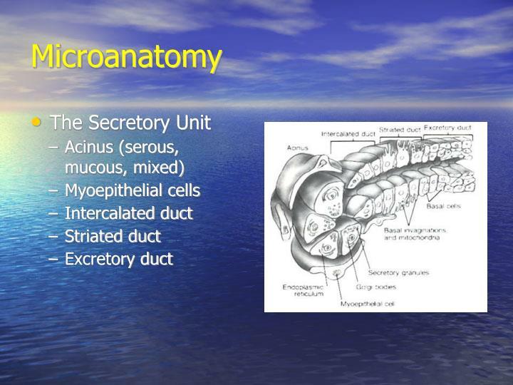 Microanatomy