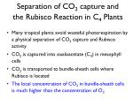separation of co 2 capture and the rubisco reaction in c 4 plants