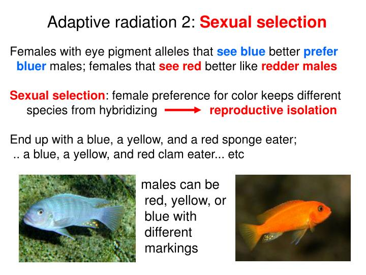 Adaptive radiation 2: