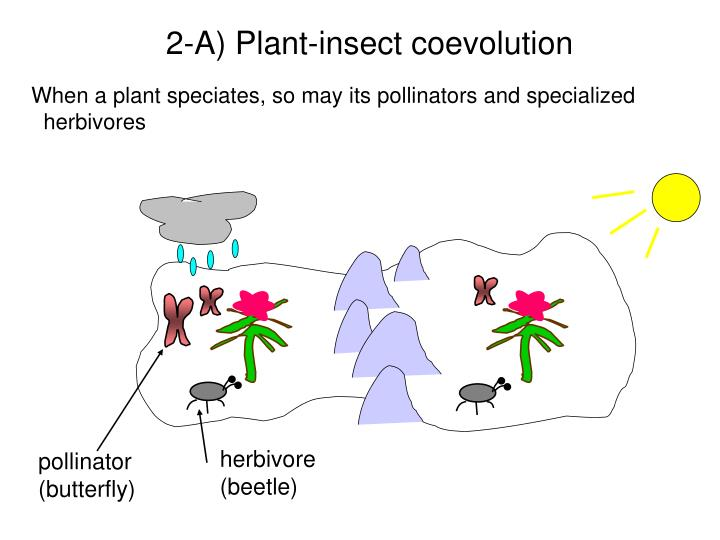 2-A) Plant-insect coevolution