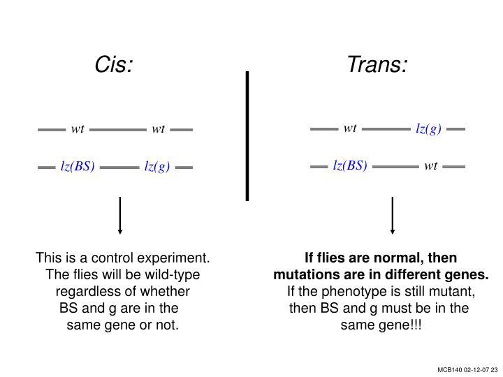Cis:Trans:
