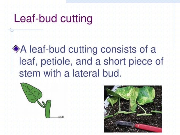 Leaf-bud cutting