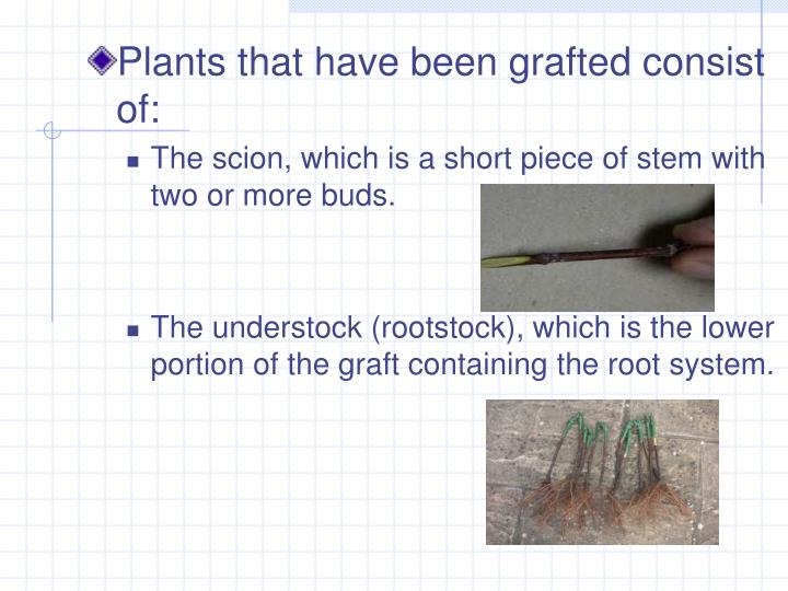 Plants that have been grafted consist of:
