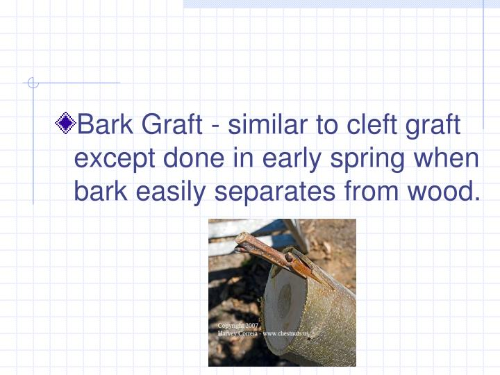 Bark Graft - similar to cleft graft except done in early spring when bark easily separates from wood.