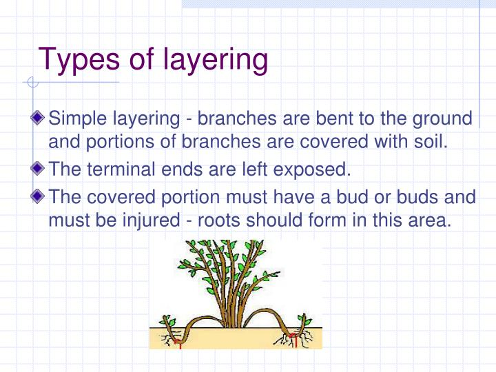 Types of layering