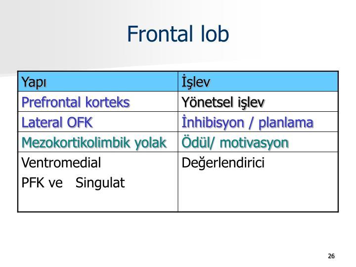 Frontal lob