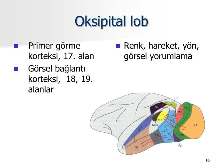 Oksipital