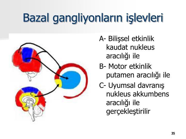 Bazal