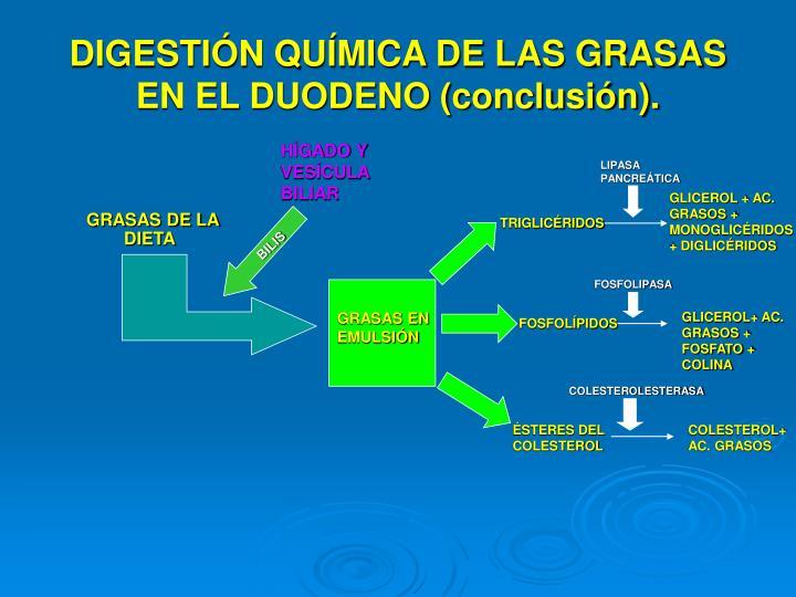 DIGESTIÓN QUÍMICA DE LAS GRASAS EN EL DUODENO (conclusión).