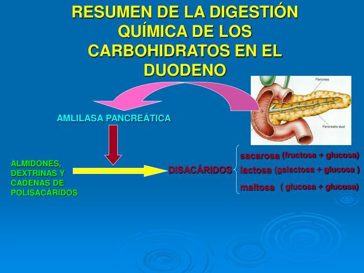 RESUMEN DE LA DIGESTIÓN QUÍMICA DE LOS CARBOHIDRATOS EN EL DUODENO
