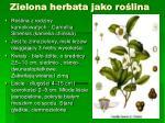 zielona herbata jako ro lina