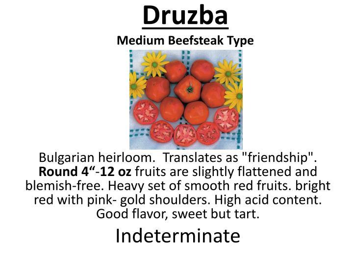 Druzba