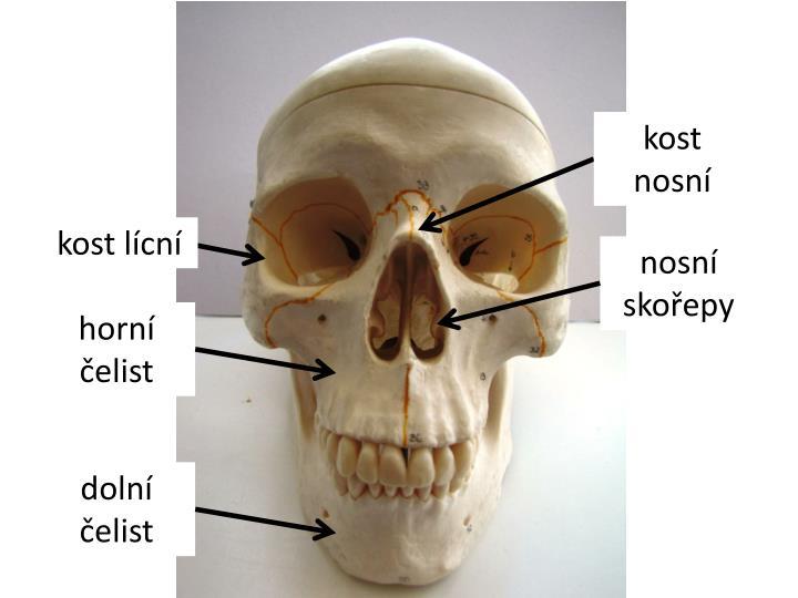kost nosní