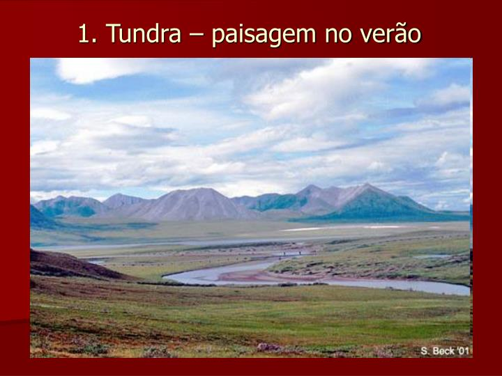 1. Tundra – paisagem no verão