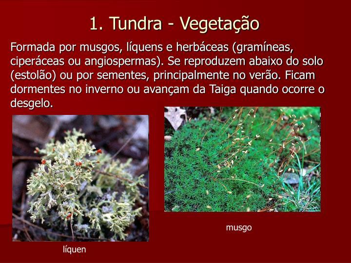 Formada por musgos, líquens e herbáceas (gramíneas, ciperáceas ou angiospermas). Se reproduzem abaixo do solo (estolão) ou por sementes, principalmente no verão. Ficam dormentes no inverno ou avançam da Taiga quando ocorre o desgelo.