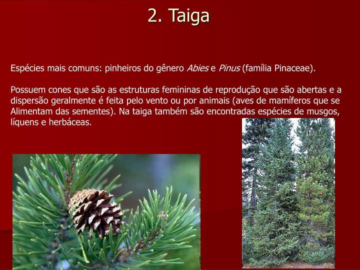 Espécies mais comuns: pinheiros do gênero