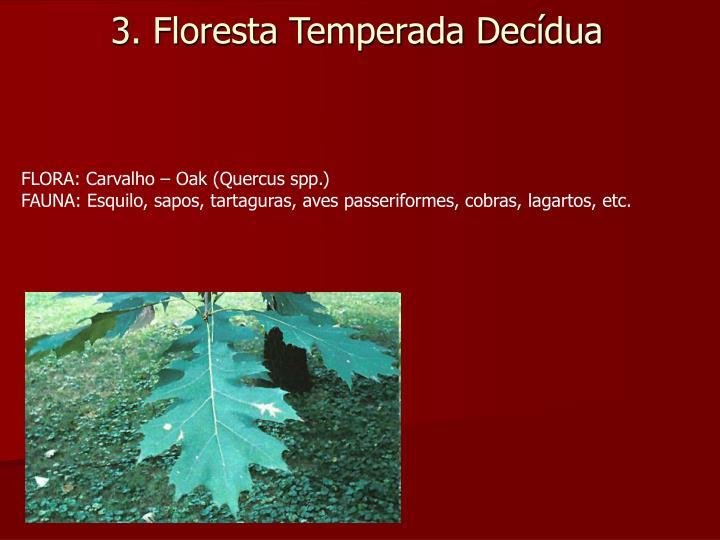 3. Floresta Temperada Decídua