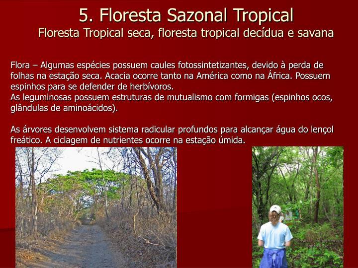 Flora – Algumas espécies possuem caules fotossintetizantes, devido à perda de folhas na estação seca. Acacia ocorre tanto na América como na África. Possuem espinhos para se defender de herbívoros.
