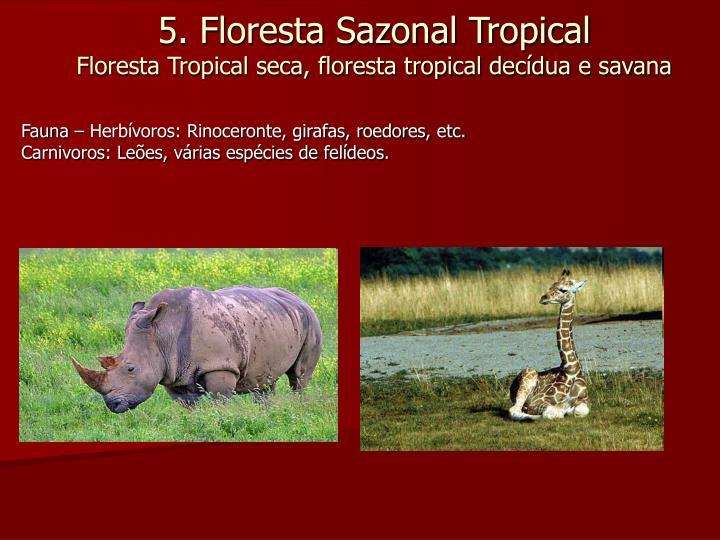 Fauna – Herbívoros: Rinoceronte, girafas, roedores, etc.