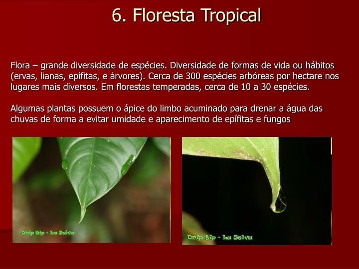 Flora – grande diversidade de espécies. Diversidade de formas de vida ou hábitos (ervas, lianas, epífitas, e árvores). Cerca de 300 espécies arbóreas por hectare nos lugares mais diversos. Em florestas temperadas, cerca de 10 a 30 espécies.