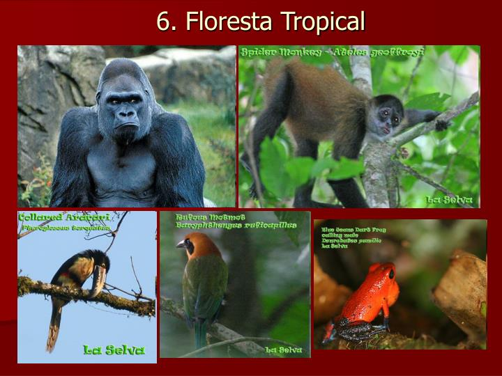 6. Floresta Tropical