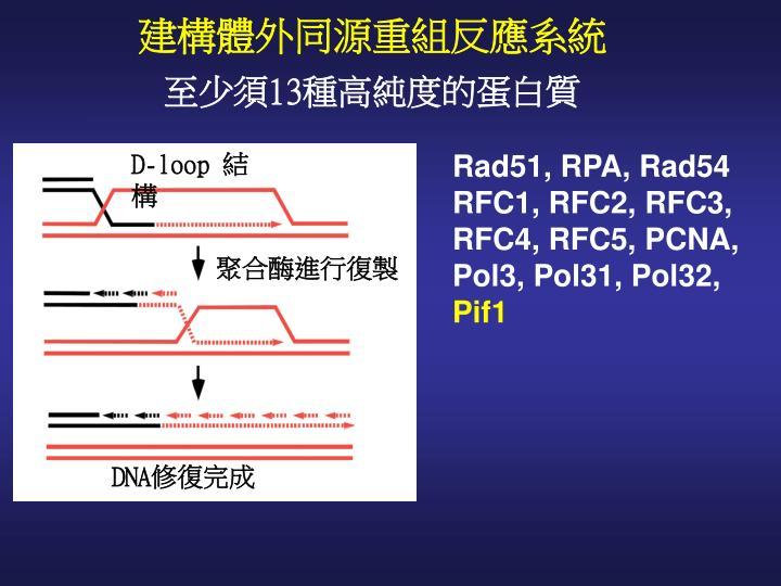 建構體外同源重組反應系統