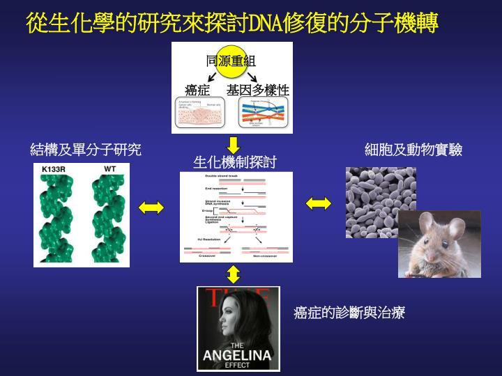 從生化學的研究來探討